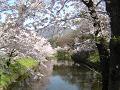 水の下も春
