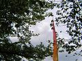 葉桜の中に立ち上がる旗