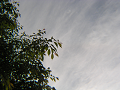 日食の日の空、葉桜と薄雲