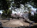 春の日の児童公園(視線の高さ:中人)