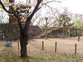 鬱金の桜と石垣と自転車と石段と鐘楼