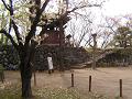 鬱金の桜と石垣と石段と鐘楼