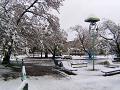 桜の枝に振りし雪かも