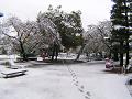 春の日に突然の雪。公園を行く誰かの足跡。