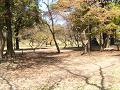 春の日の森の中の広場