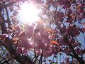 春の日差しと桜の花と