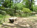 ツツジの丘と木のベンチ