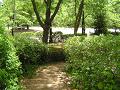 木々の間を下る道(階段)