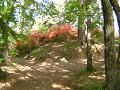 レンゲツツジの咲く丘 交差する踏み分け道