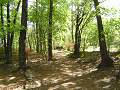 森の木漏れ日に照らされる小道。