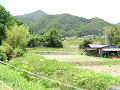 山里の景色(葱畑)