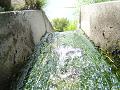側溝の中の水の流れ 浅く。