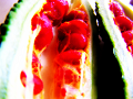 熟し始めたニガウリの真っ赤な仮種皮