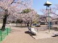 春の終わりの児童公園
