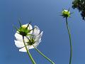 花とつぼみと