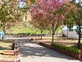 秋の公園の散歩道