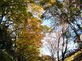 紅葉の木漏れ日