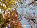 秋の空を仰ぐ