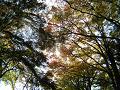 赤い葉、緑い葉、黄色い葉