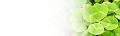 ブログヘッダ:四つ葉のクローバー