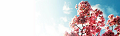ブログヘッダ:八重桜