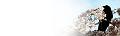 ブログヘッダ:桜と烏