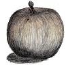 リンゴ(フジ)古新聞の写真のように 背景透過