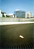 駐車場の猫