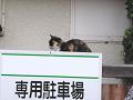 塀の上の三毛猫。