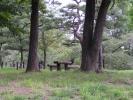上田城址公園 木のベンチ
