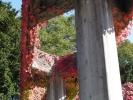 蔦の絡まる柱1
