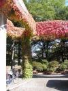 蔦の絡まる柱2