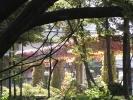蔦の絡まる柱3