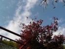 紅葉(白蛇神社)