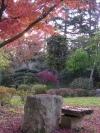 紅葉と岩のテーブル