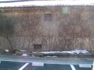 土蔵の壁に絡んだ蔦