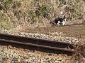 線路脇の猫