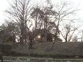 林の中に沈む夕日