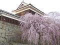 北櫓と枝垂れ桜