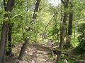森の中の沢