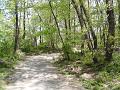 林の奥へ進む曲がりくねった下り坂