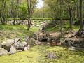 森の中の人工的な池