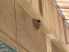 軒下の燕の巣
