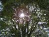 大樹の木漏れ日
