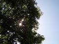 初夏の木漏れ日
