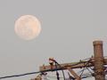 電柱と満月