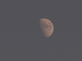 夕方の半月