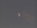 夕方の半月(ロング)